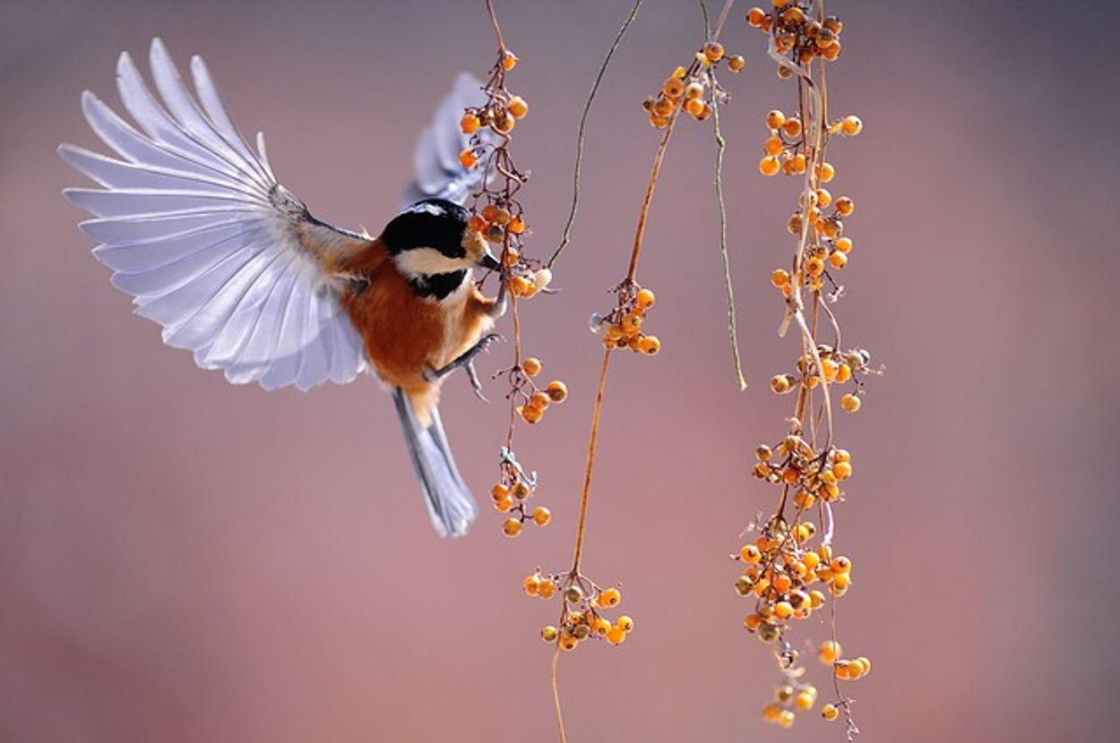 Afbeelding van Tijd om vogels te tellen. Hoe staat de natuur ervoor?
